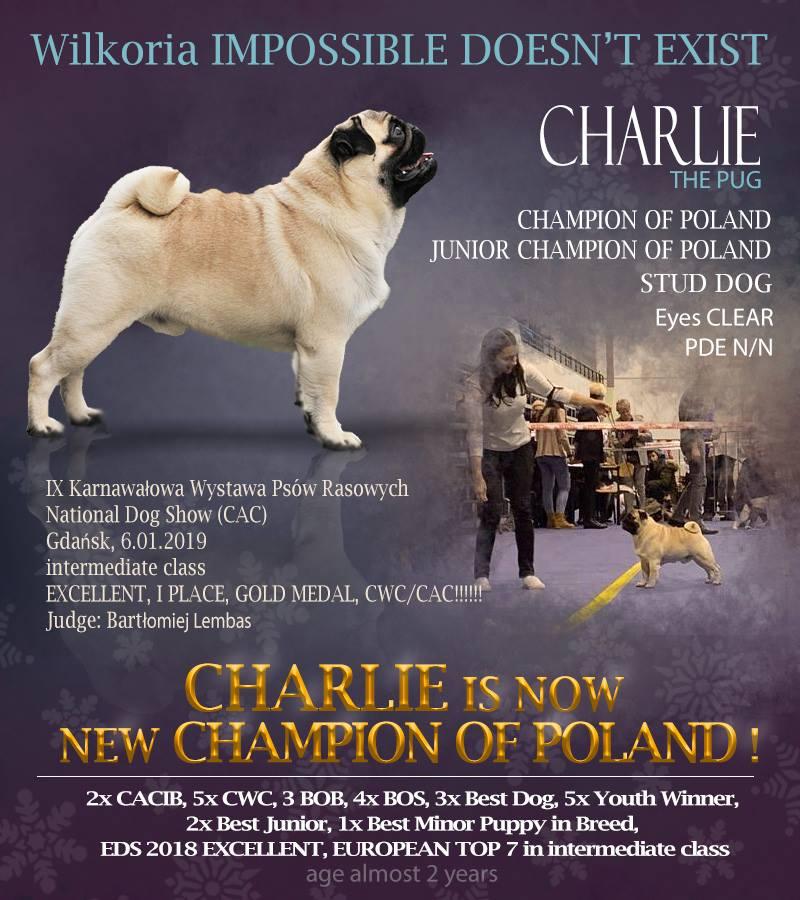 Charlie – Champion Polski!