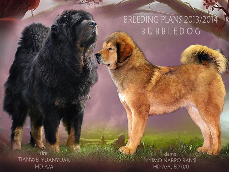 breeding_bubble2