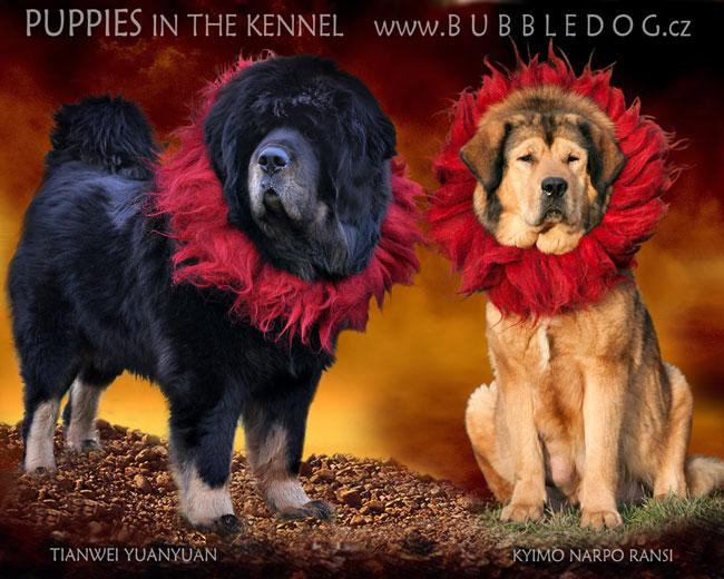 breeding_bubbledog