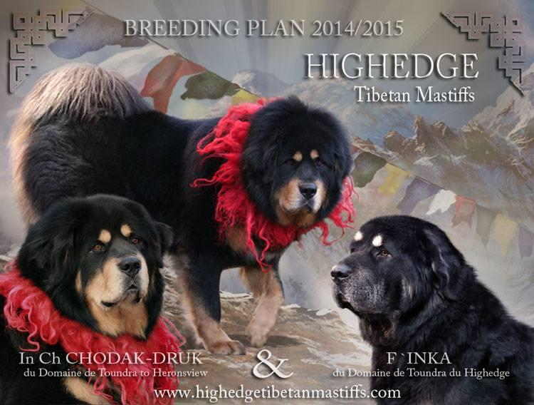 breeding_highedge
