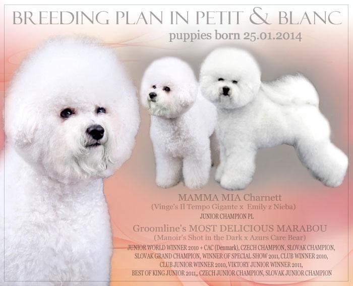 breeding_petit