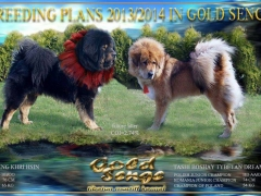 breeding_goldsenge
