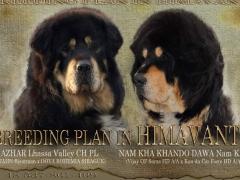 breeding_himavanti
