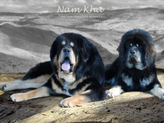 breeding_kunzbao